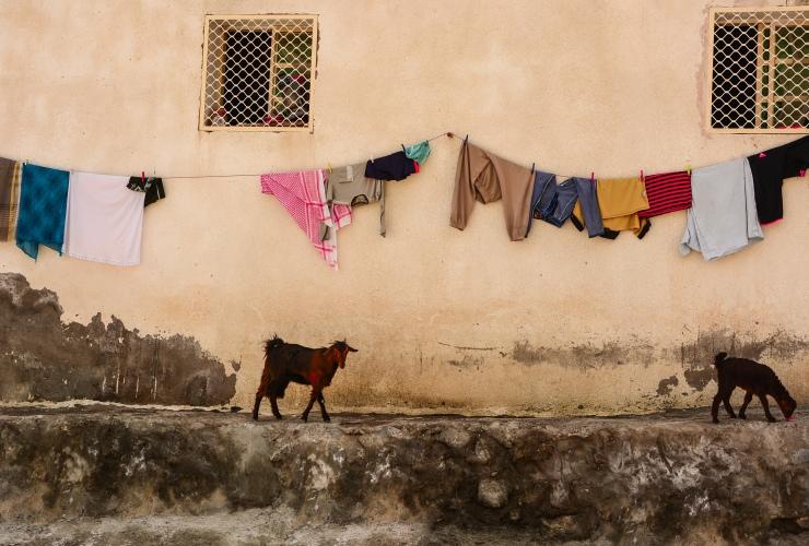 facade of a kumzari house/ goats are ubiquitous in kumzar