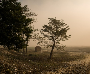 A foggy morning in Jalpaiguri, my father's beautiful hometown.